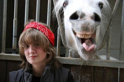 funny_horse_photobombs_640_04