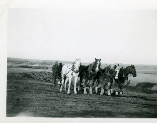 shoestring scrapbooking wallpaper border horses