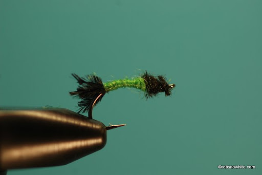 Caddis Worm