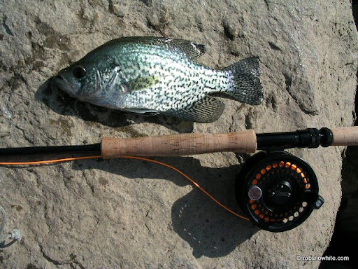 black crappie, chain bridge, dc