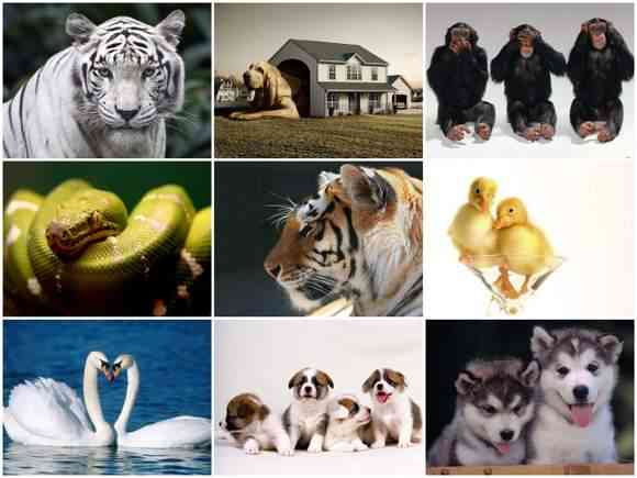 100 Animals Wallpapers