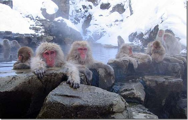 snow_monkey_bath