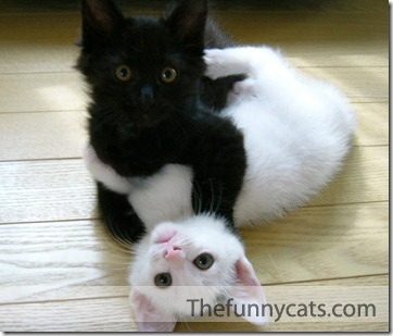 beso de gatos (20)