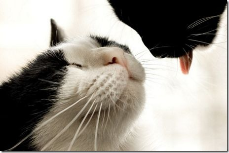 beso de gatos (19)