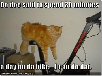 excercise-bike-cat