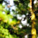 登山道入り口にかかっていた蜘蛛の巣。景気はどうですか。