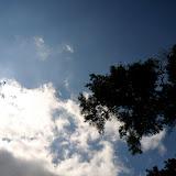 いつもは樹の下から景色を撮っているので、たまには樹も。