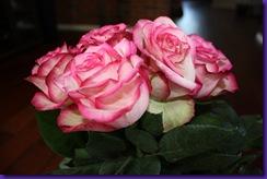 roser 008