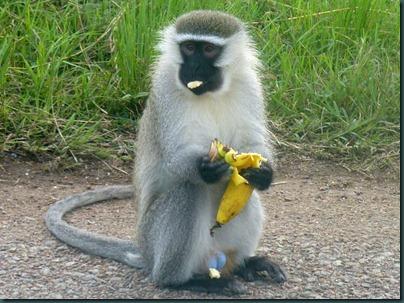 Queen Eliz park and Kampala 149 (2)