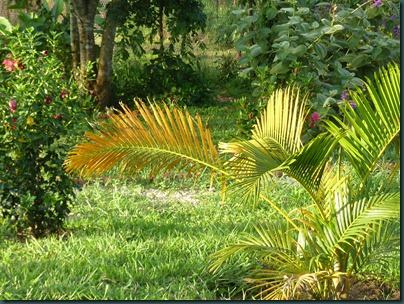 Landscaping Dec. 2010 027