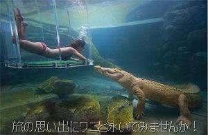 ワニと泳ぐ水族館