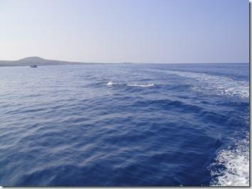 ハワイ島・イルカ
