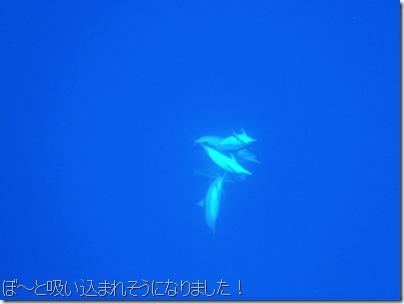 イルカと泳ぐ・ハワイ島コナ