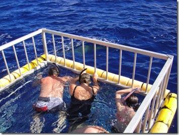 ハワイ・サメツアー