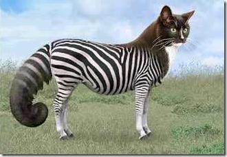 Switcheroo Zoo cat