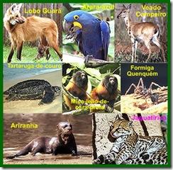 animais-extincao