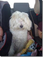 Riley in the car