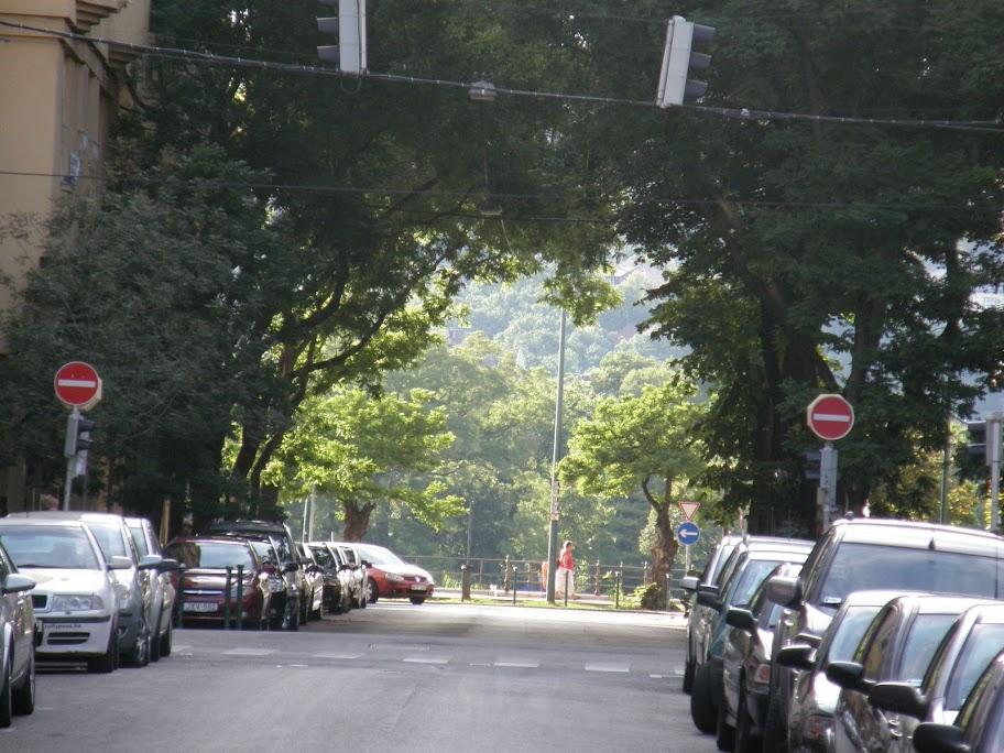 Újlipótváros, XIII. kerület,  fák