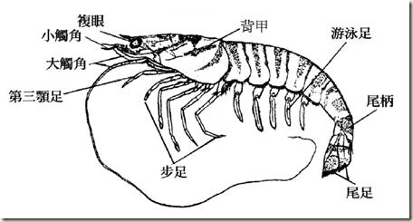 求 动物解剖示意图... lh5.ggpht.com 宽456x245高