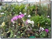 2010.08.13-008 orchidées et broméliacées