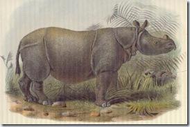 Rhinoceros sondaicus inermis