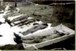 0203 faux charnier de timisoara