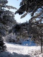 Jasna ob poti v nedotaknjenem snegu