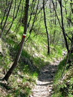 Pot skozi gozd od Zabrežca proti Jezeru