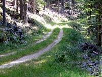 Skoraj kolovozna gozdna cesta