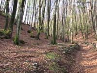 Vzpon skozi bukov gozd