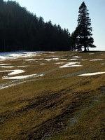 Voda staljenega snega odteka v potokih