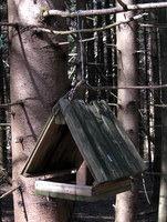 Ptičja hišica ob poti skozi gozd