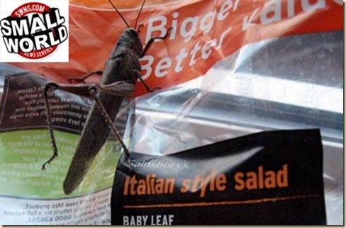 gaganhoto na salada