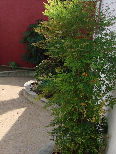jardim6