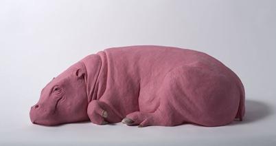 Hippo02
