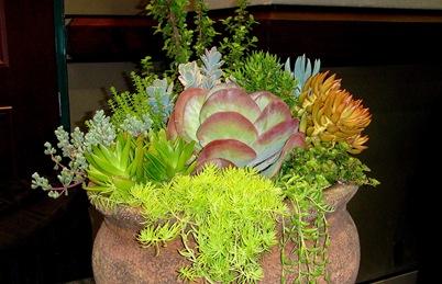 sg090831_succulents
