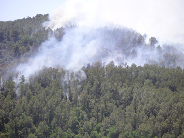 Imatge del bosc de La Palma (darrera dels horts) cremant el 19 de juny del 2005. La imatge va fer-se cap a les 14:00h, ja havien intervingut els bombers. <b>Autor: Konfrare Albert</b>