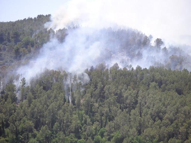 Imatge del bosc de La Palma (darrera dels horts) cremant el 19 de juny del 2005. La imatge va fer-se cap a les 14:00h, ja havien intervingut els bombers. <b>Autor: Konfrare Albert</b>