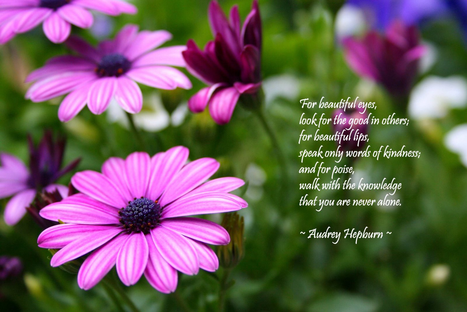 For Beautiful Eyes Audrey Hepburn Quote 5 Quotes Links