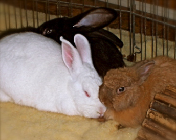 The Bunny Trifecta