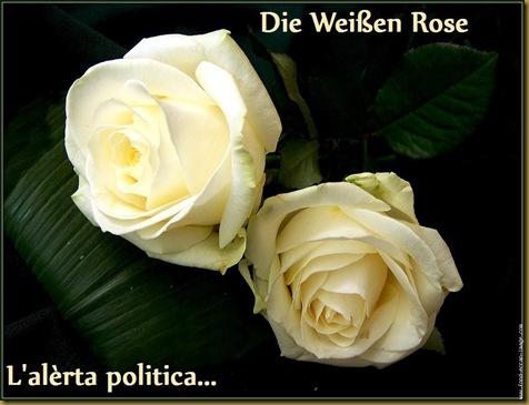 die weissen rose