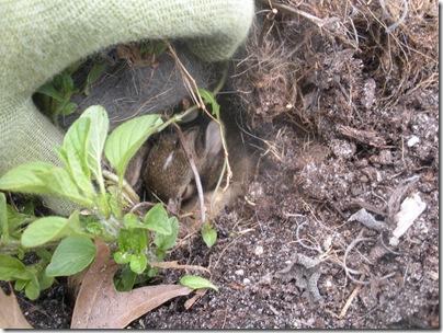 bunnies 4-4 003