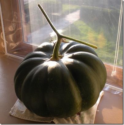 Fairy Tale Pumpkin 003