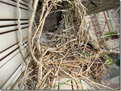 bird nest 002