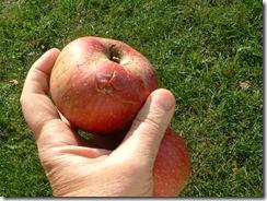 Apples 2010 009
