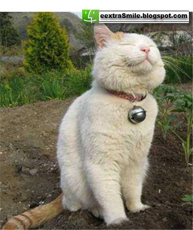 cat thinking.jpg