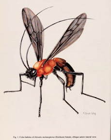 color wasp habitus