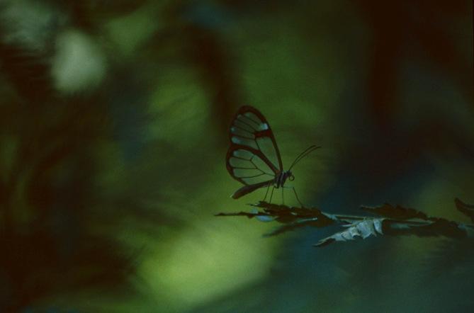 374 Mariposa de Iguazú
