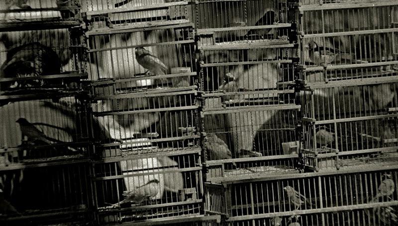 442 prisiones