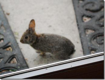 tinny bunny